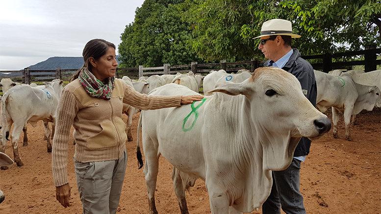 Dia de Campo discute Manejo Reprodutivo de Fêmeas Nelore em Mato Grosso do Sul