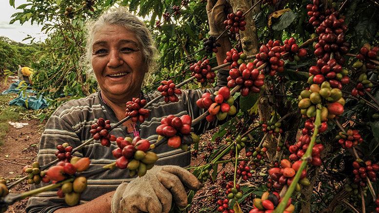 Governo mantém isenção de ICMS aos produtores de café de Mato Grosso