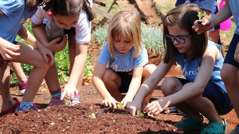Dia mundial da alimentação saudável: estudantes cultivam horta orgânica