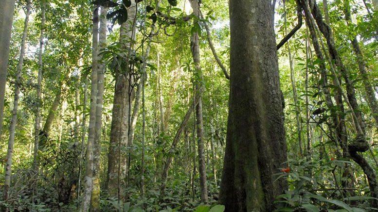 Programa REM realiza primeira missão de monitoramento em Mato Grosso
