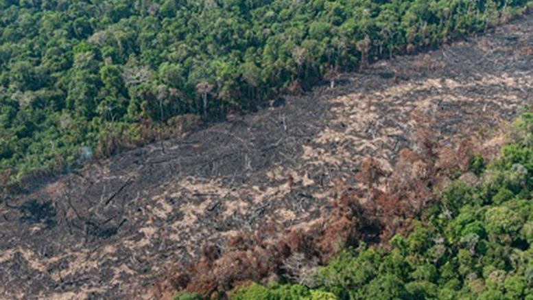 Unidade avança em sua estruturação para combater desmatamento ilegal