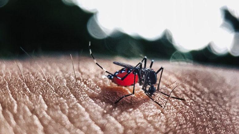 MT tem quatro vezes mais casos de chikungunya em 2018 em comparação com o ano passado