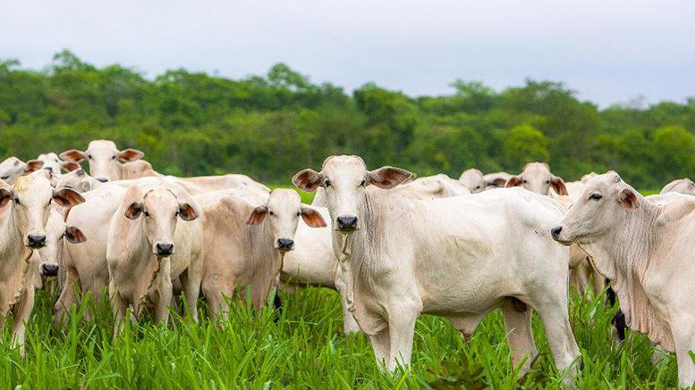 Parceria viabilizará primeiro centro de pesquisas de produção de gado de corte em MT